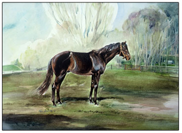 Seattle Slew, Triple Crown Winner, 1977 at Spendthrift Farm, Lexington, Ky