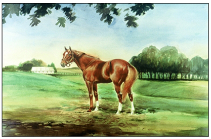 Secretariat, Triple Crown Winner in 1973,  in his pasture paddock, Claiborne Farms, Paris, Ky